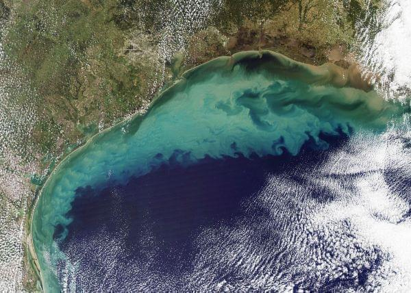 Rivers draining into the Gulf of Mexico carry nutrients from fertilizers, contributing to blooms of phytoplankton seen here. (Nov. 13, 2009 photo)