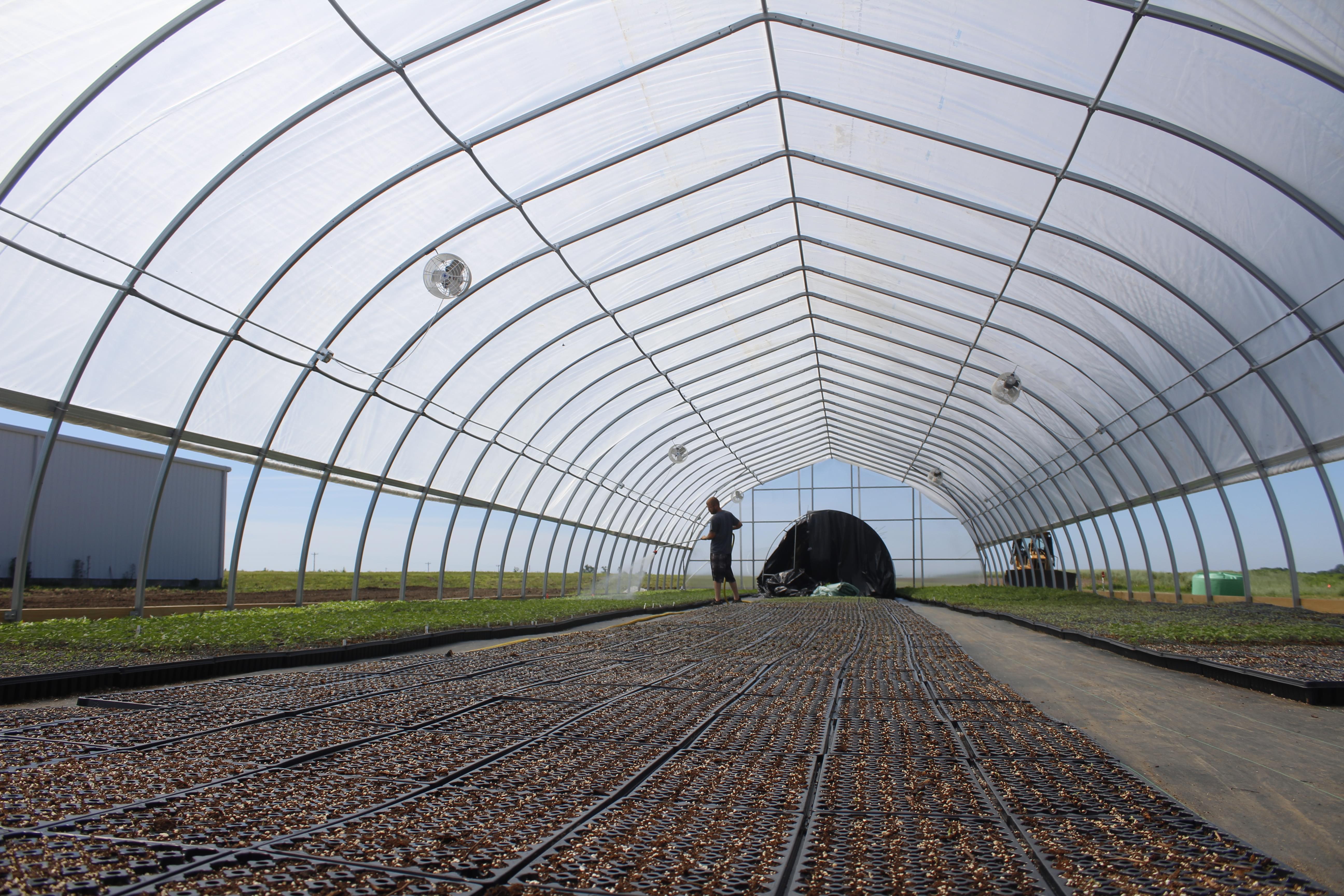 Logan Bird waters about 90,000 hemp seedlings on Andy Huston's farm in western Illinois.