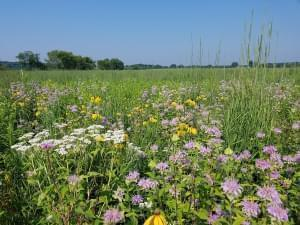 A beautiful field of prairie flowers and plants